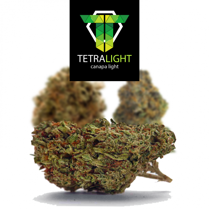 Amnesia Haze cannabis light