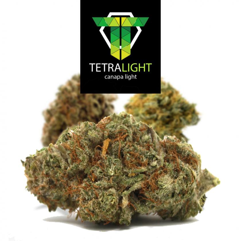cannabis light chocolope