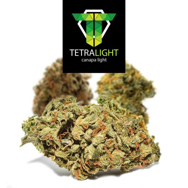 cannabis light super skunk