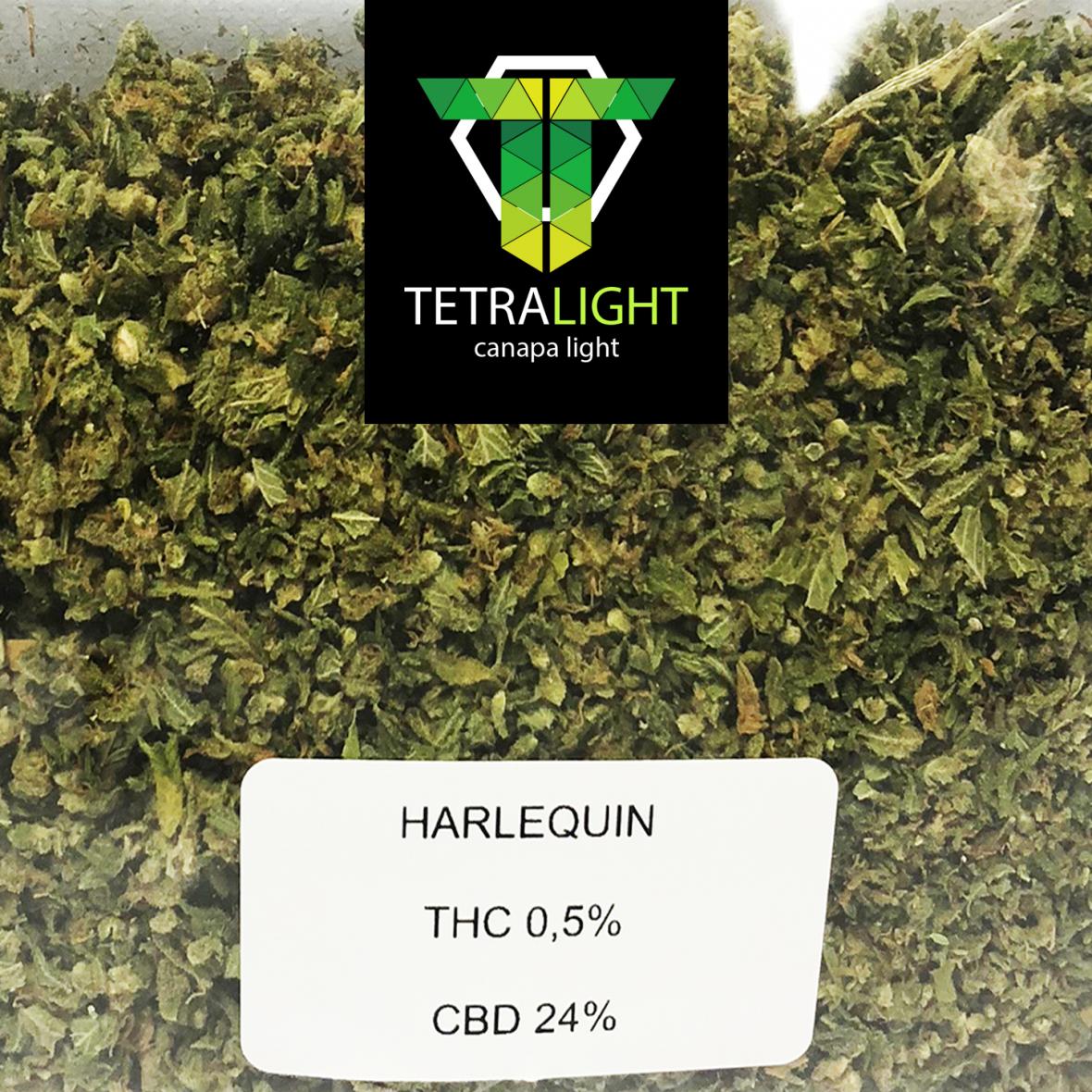 TRINCIATO-HARLEQUIN
