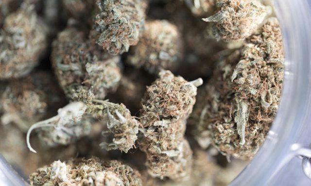 parlamentari cannabis