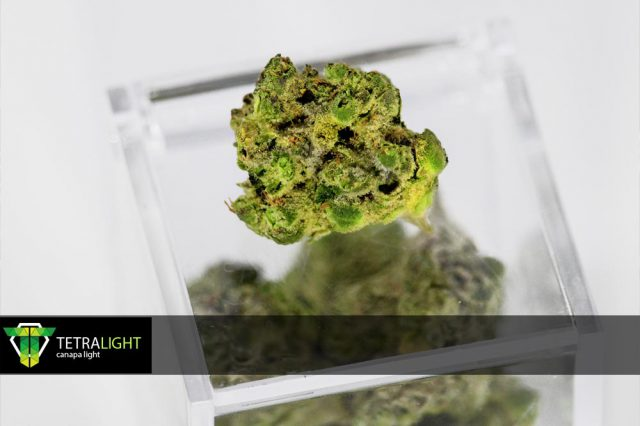 Cannabis light Tetralight.it