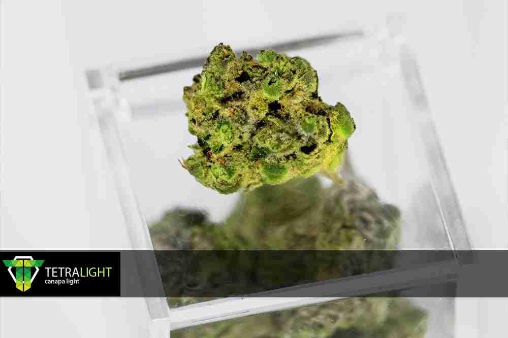 Cannabis light Tetralight.it