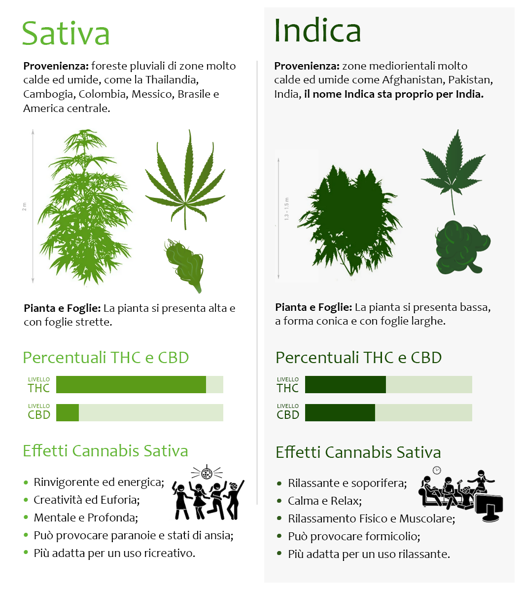 Differenze Cannabis Sativa e Indica. Immagine protetta da Copyright Tetralight.it